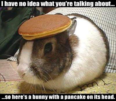 pancake bunny 1